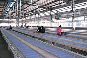 Lanyards Factory-Conveyor Belt
